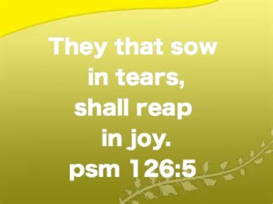 sow in tears